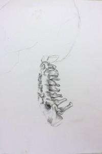 Spine | graphite